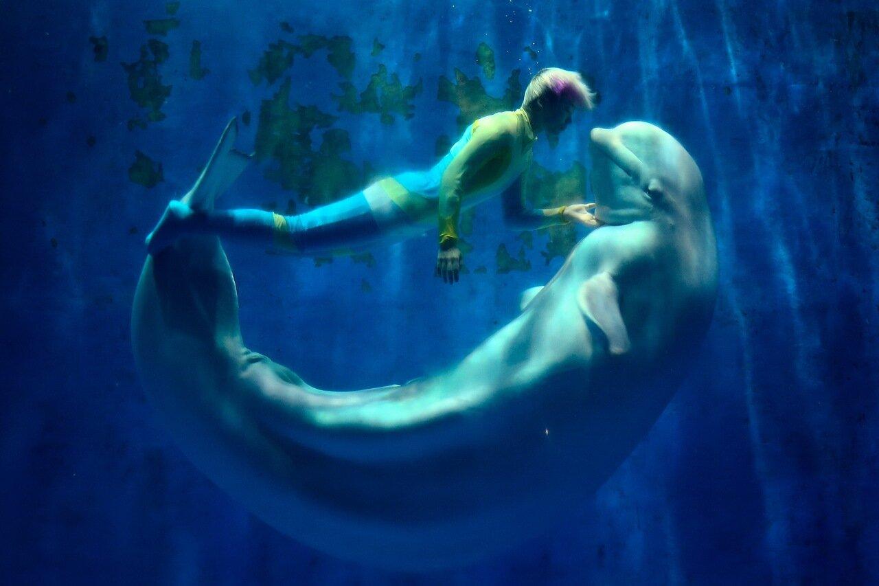 Шоу-представление белых китов в Китае (5 фото)