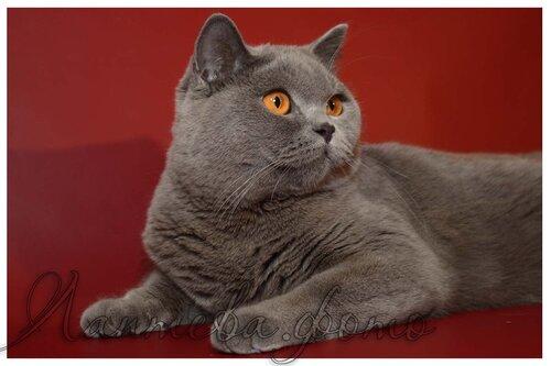 Лаптева-фото - Фотографии животных для питомников и заводчиков 0_fa26c_831176d8_L