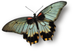 mzimm_daydreamer_addon_butterfly_sh.png