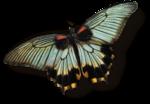 mzimm_daydreamer_addon_butterfly_sh.png