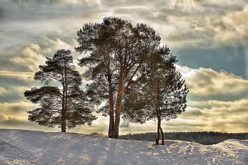 Скупые краски зимы