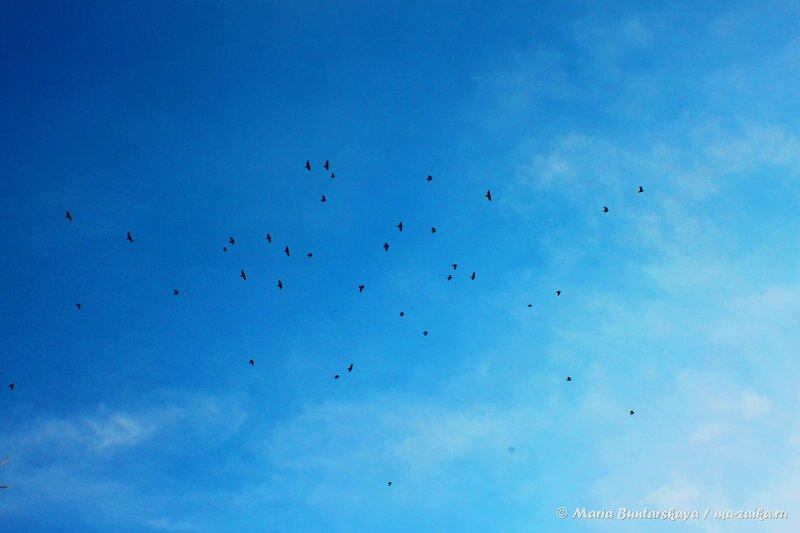 Птицы в ярком небе, Саратов, 10 января 2014 года