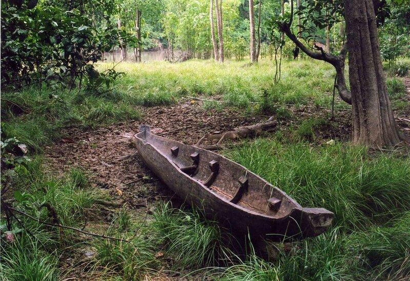дерево из которого делают лодки