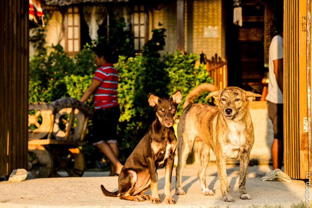 Собаки на Филиппинах