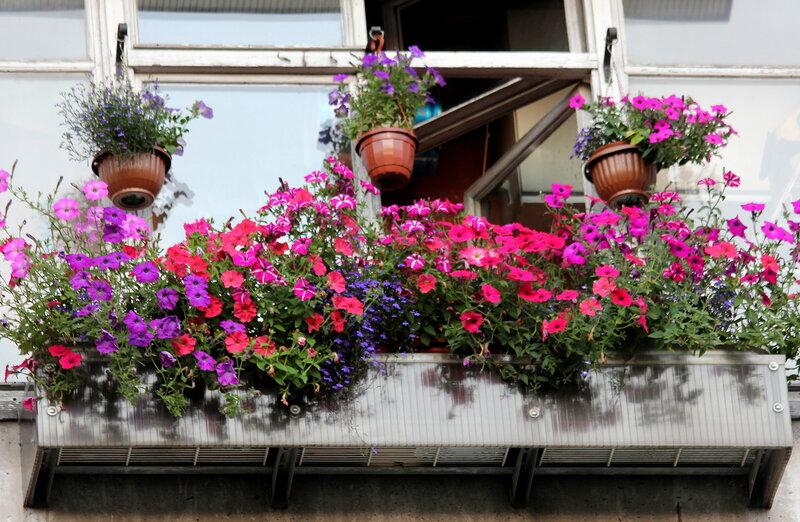 Моё балконное лето.