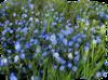 мой клипарт - цветочные поляны в  пнг