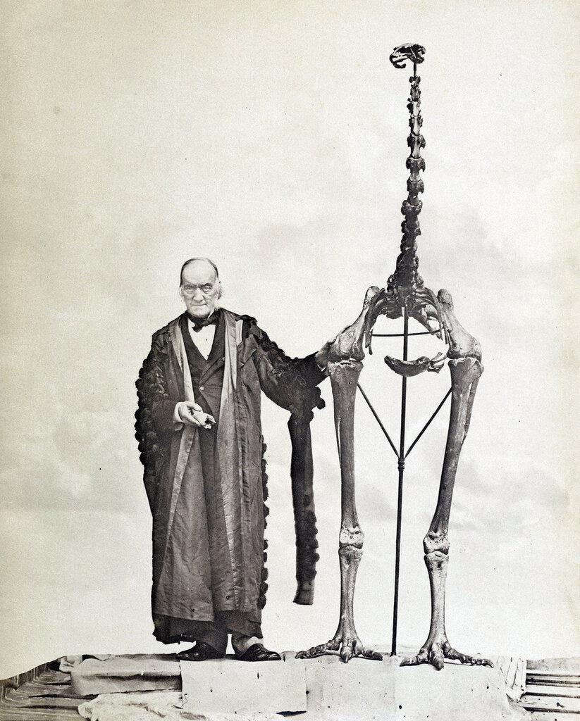 Richard Owen and a giant Moa skeleton, c. 1879 Ричард Оуэн с собранным им скелетом птицы моа (Dinornis giganteus )