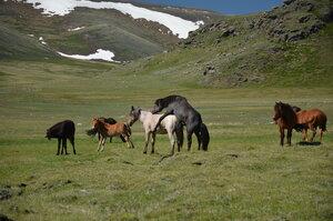 Лошадки:)