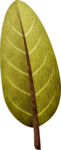 (90).png