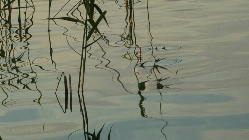 Вода прозрачная (30.07.2013)