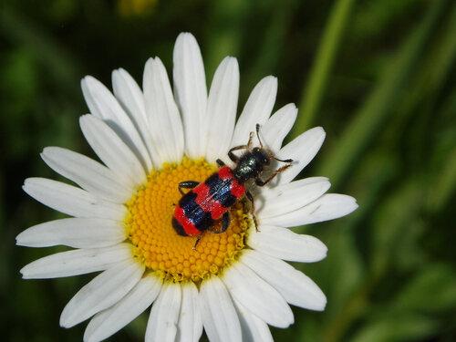 Пчеложук обыкновенный Автор фото: Владимир Брюхов