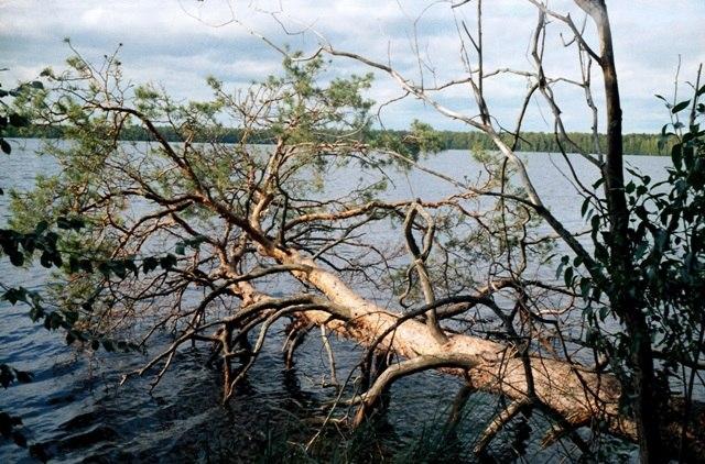 озеро Большое (Шарское)