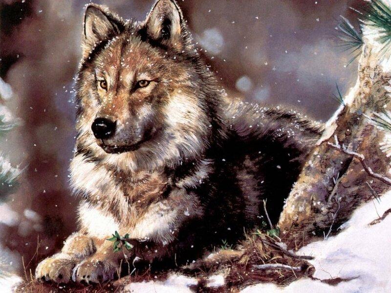 Что связывает девушку и волка, в ночи степной сидящих у  костра...Американская художница Maija