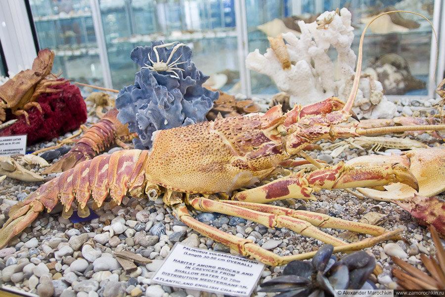 Колллекция ракообразных в музее ракушек Корфу