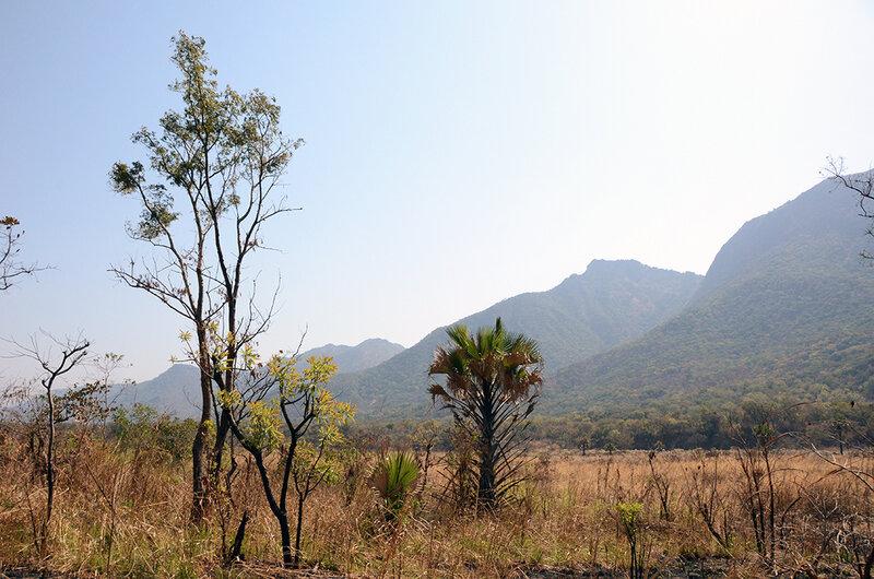бамбуковый долина1.jpg