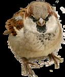 http://img-fotki.yandex.ru/get/9306/97761520.1e/0_7d645_ec72b833_orig.png