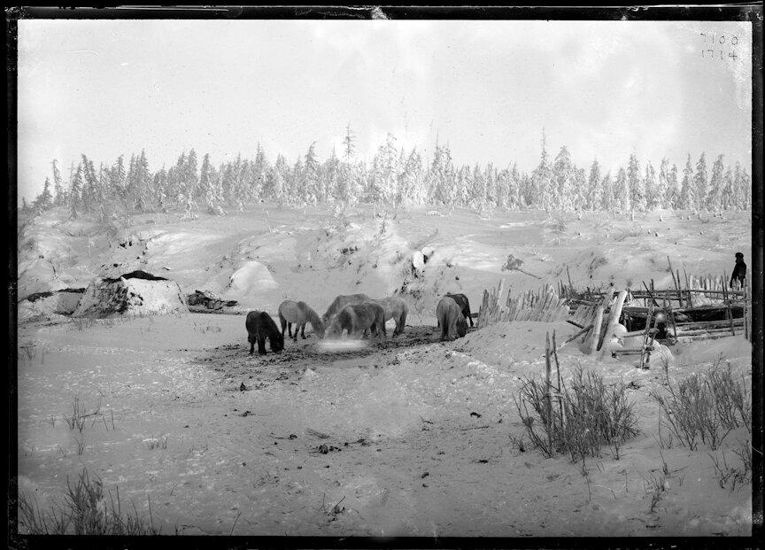 Пастбище вблизи дома якута в полярном регионе
