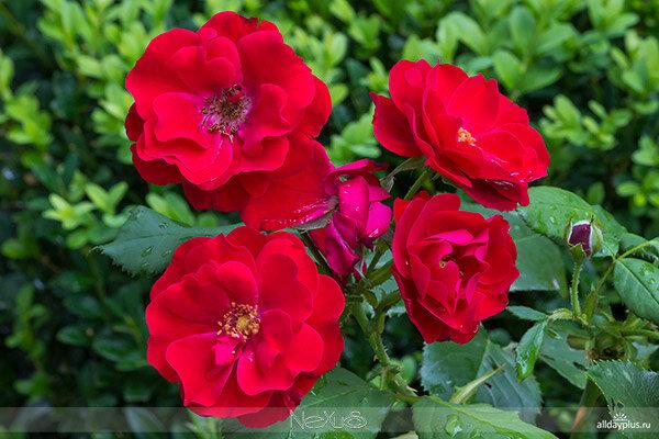Я любл5a8ю все цветы, часть 62.