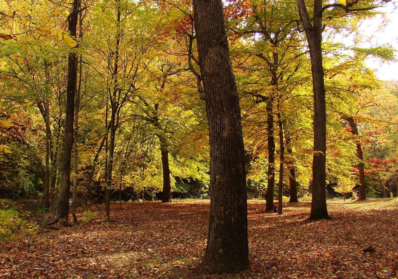 Земельный участок в лесу