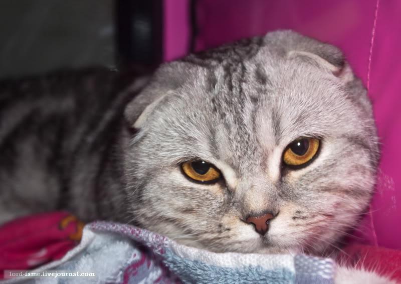 cats16.JPG