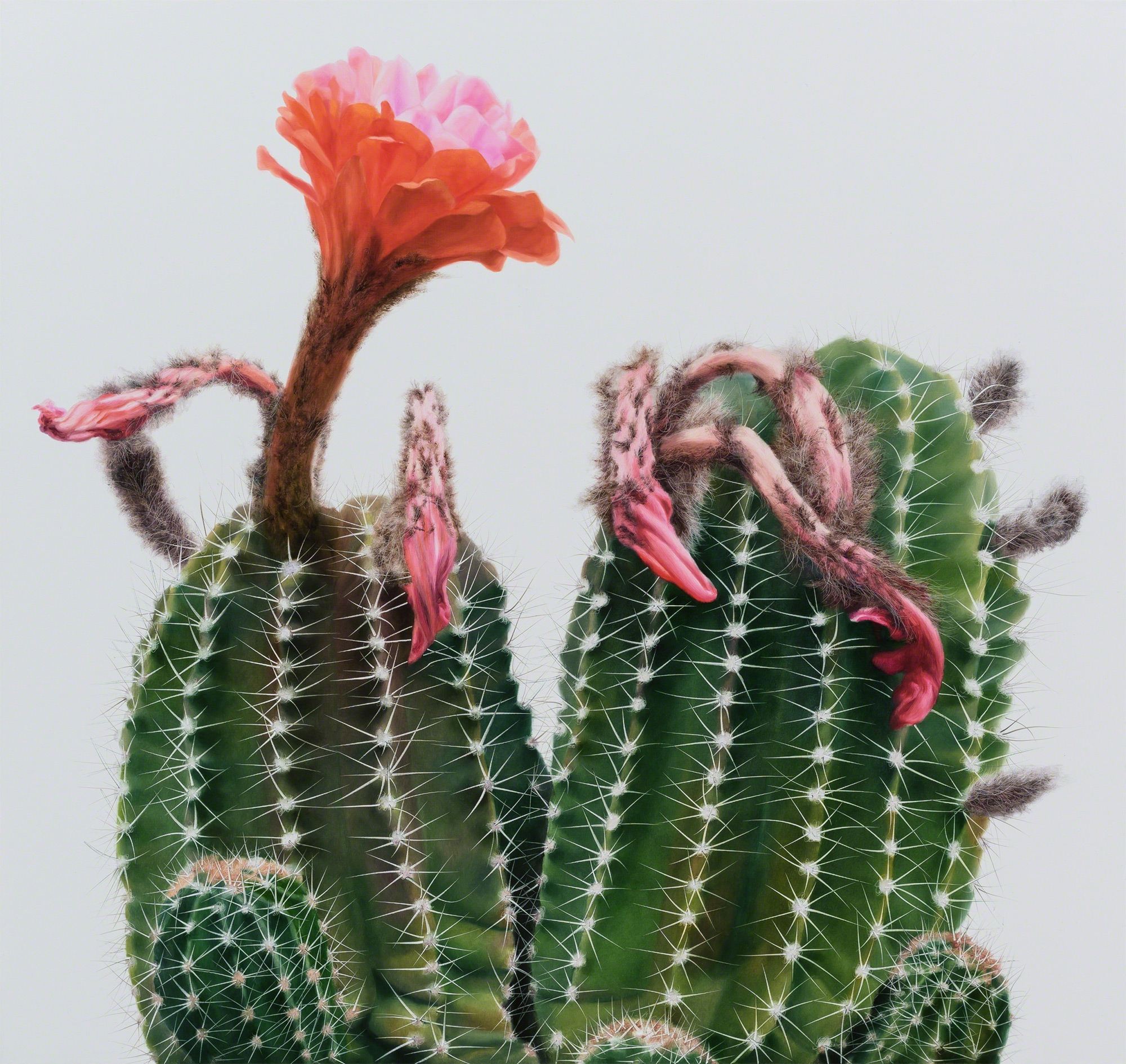 Cactus No. 98 , 2015. Oil on canvas. Courtesy Johyun Gallery.
