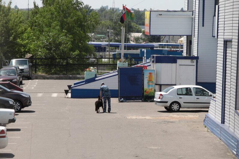 Женщина присела возле авто пописать фото 57-886