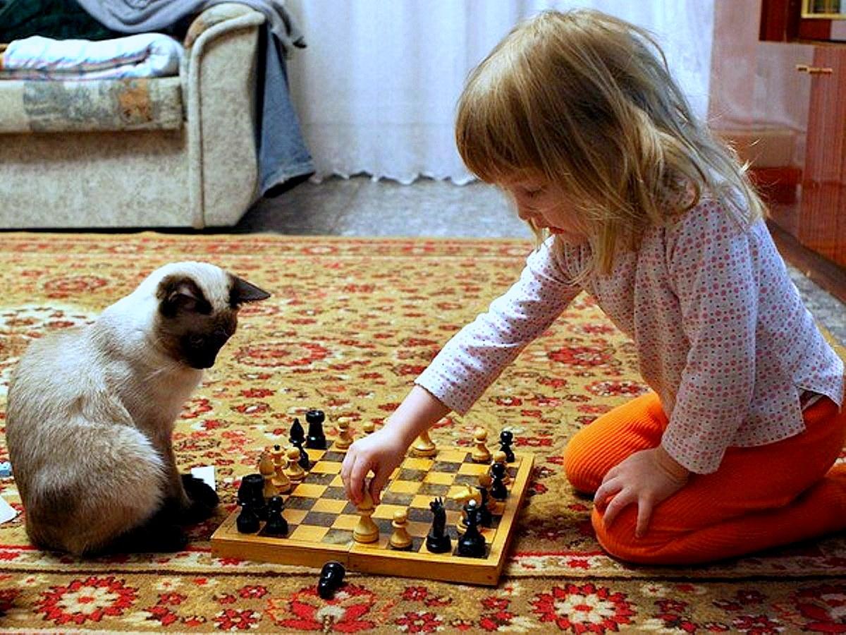 Тема черно-белых полей шахматных...