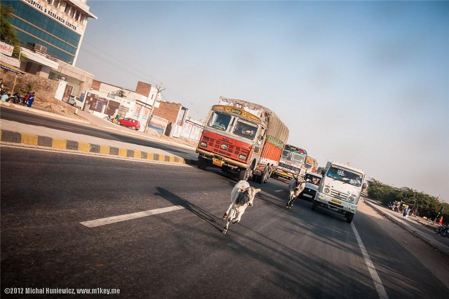 Священные коровы на автостраде - путешествие по Индии / India by Michal Huniewicz