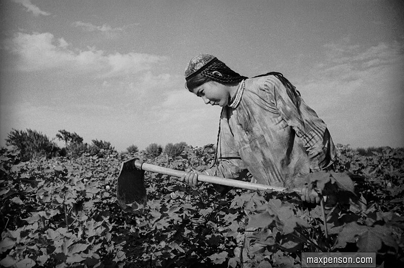 Девушка-узбечка с кетменём в поле хлопчатника