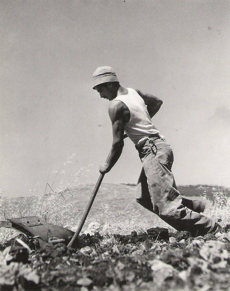 1949. Французский еврей за очисткой земли
