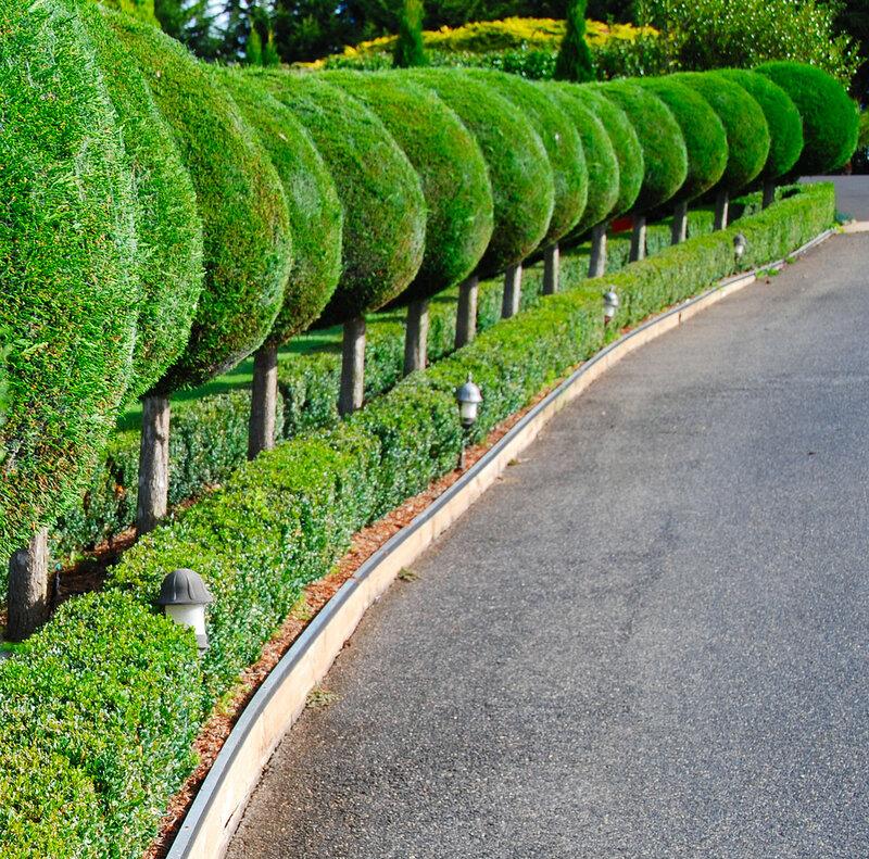 живую изгородь в картинках предстоит сразиться дома