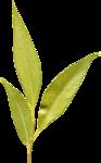 jbillingsley-youaremyhappy-leaf.png