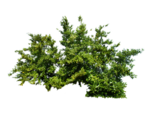 png_bush_1_by_moonglowlilly-d5tk4qh.png