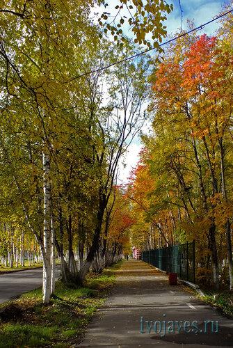 Фото города Инта №5859  Аллея с южной стороны Полярной 18 15.09.2013_11:57