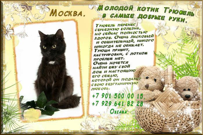Москва. Пушистый молодой котик Трюфель в самые добрые руки.