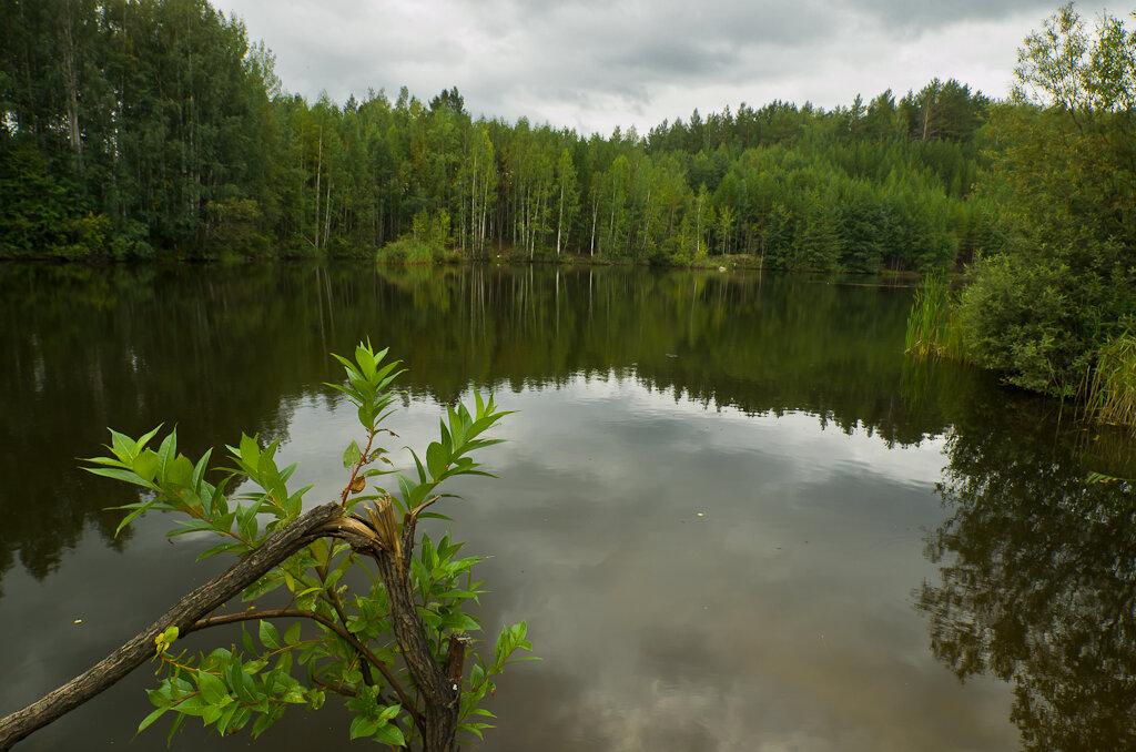 Фото 16. Лесное озеро, снятое на Samyang 14 mm/2.8... Пожалуй, четкость листьев на переднем плане впечатляет...