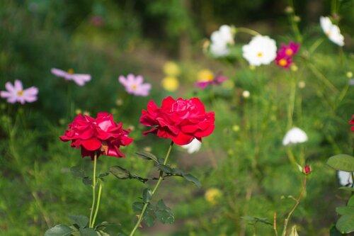Тещин сад