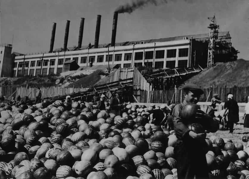Watermelons from the Lower Volga, August, 1932