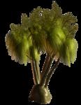 R11 - Palms - 2013 - 004.png