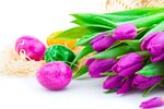 Easter eggs and flower tulips