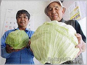 Японцы в шоке от урожая — рядом с АЭС «Фукусима-1»