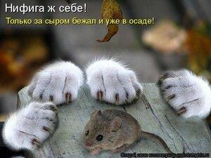 http://img-fotki.yandex.ru/get/9309/194408087.4/0_a5ffd_d8668c8a_M.jpg