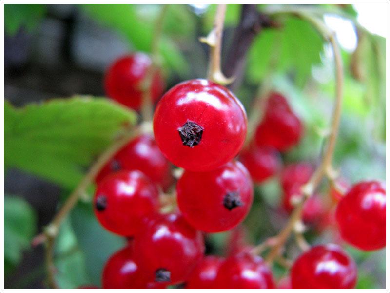 летние ягоды 5