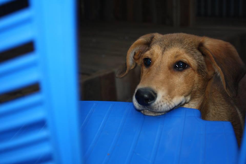 Ляля собака из догпорта