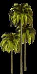 Palms  (25).png