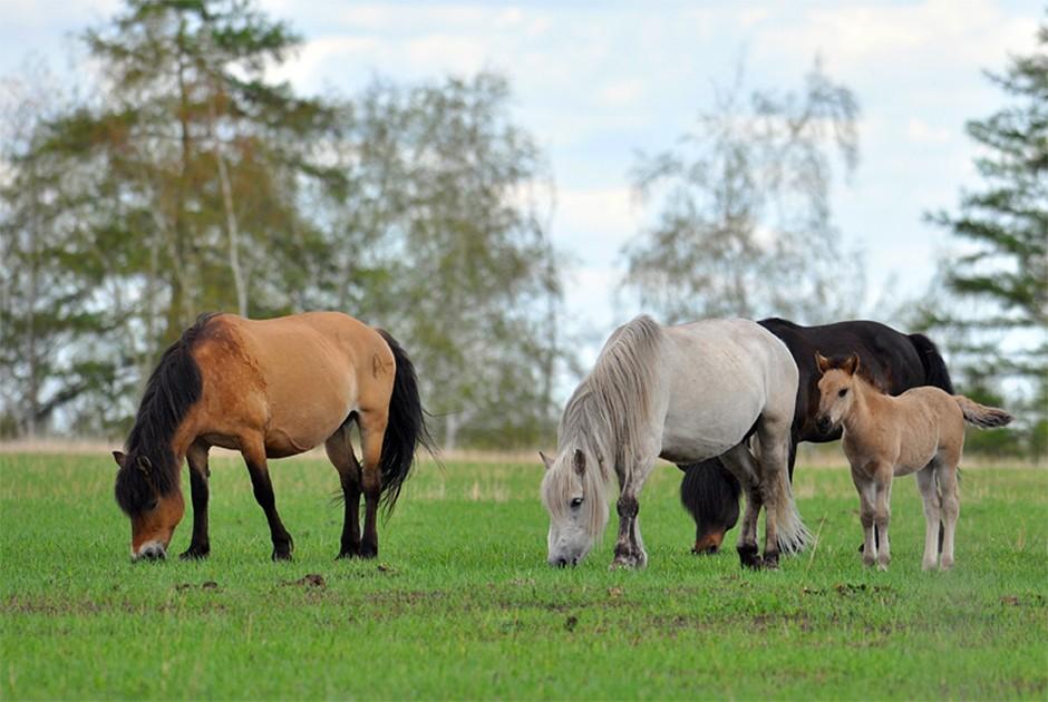 3. Дикая якутская жеребятина В Якутии издревле употребляют в пищу конину. Причем местные жители пред