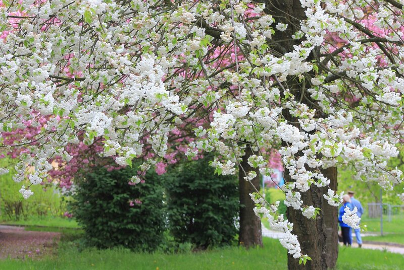 Времена года и весна в Бад-Шлема