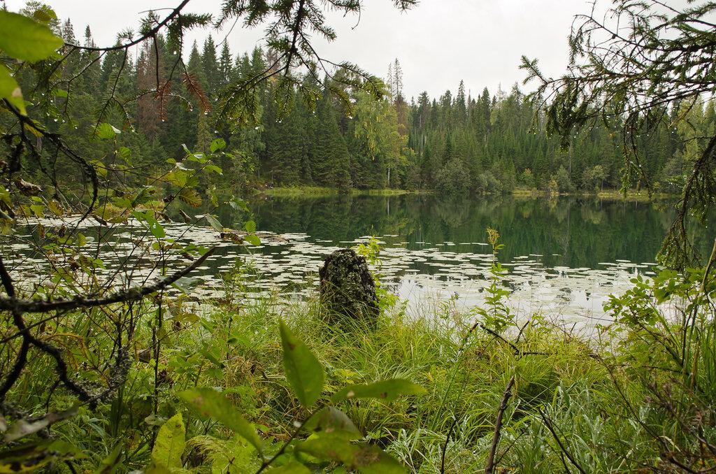 4. Лесное озеро. Образец фото на Nikon D100 KIT 18-55