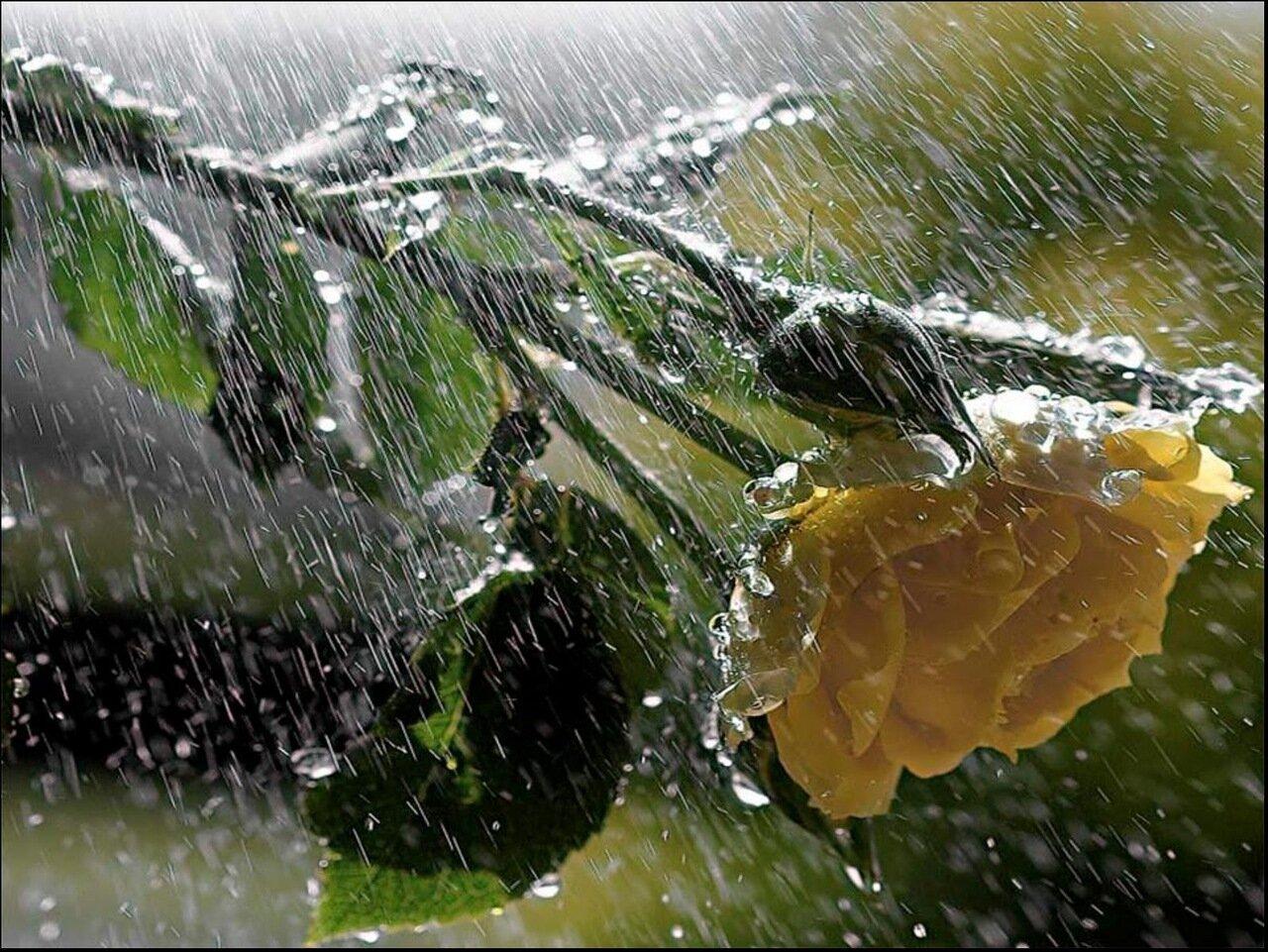 Без тебя я цветок без дождя