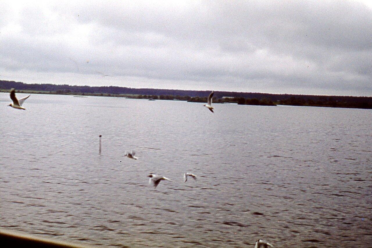 Чайки на Волге. 1971